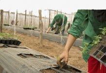 arbeidsomstandigheden in agrarische sector