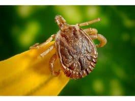 week van de teek ziekte van Lyme