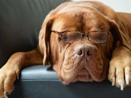 werknemer allergisch voor honden Arbowet
